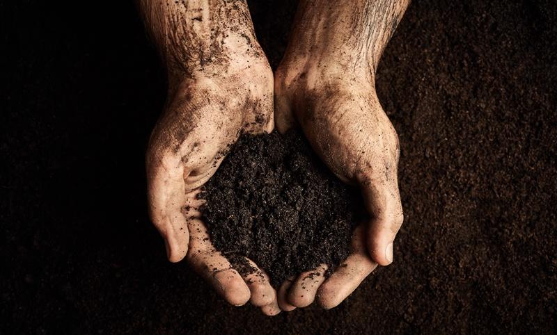 Soil: the forgotten resource