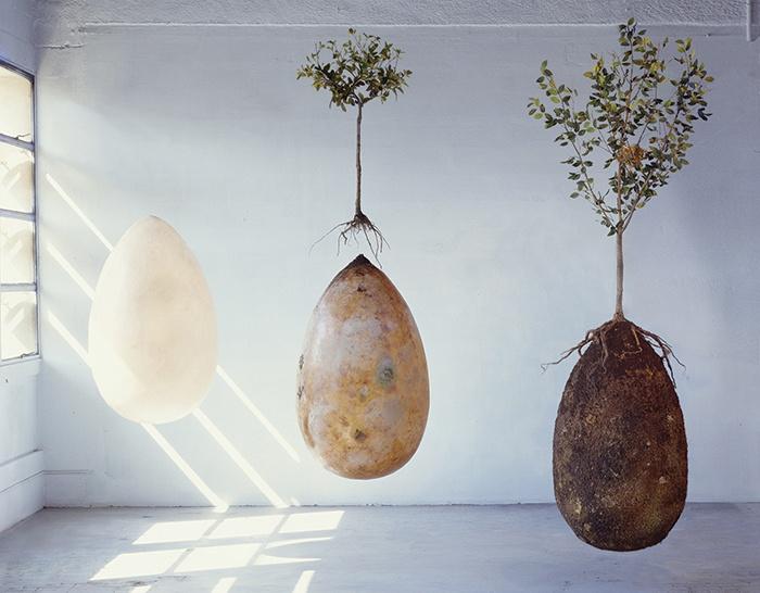 Ashes to branches capsula mundi