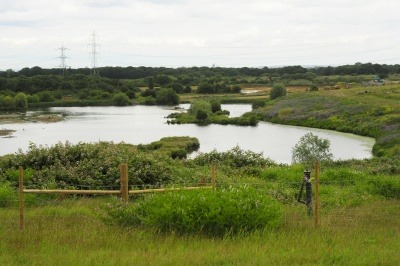 Beddington Farmlands nature reserve