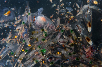 MPs urge government to protect oceans with a ban on plastic microbeads