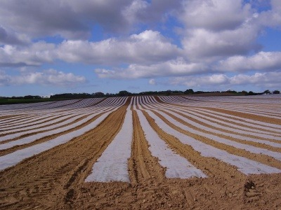 Polythene crop covers on a farm on the Isle of Wight