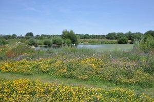 The Tame Valley Wetlands in Warwickshire.