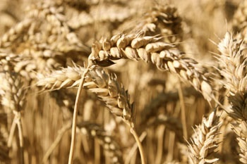 New cap on crop-based biofuels approved by ENVI