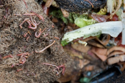 New compost feedstock guidance published