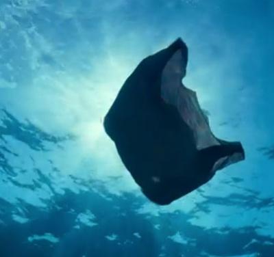 Plastic bag litter on UK ocean floor has fallen by a third