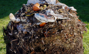BBC highlights green waste contamination problem