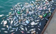 Plastic bottles floating in a river