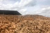 Cassava waste.