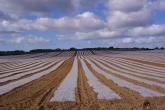 Plastic crop covers on a farm on the Isle of Wight