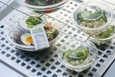 Salad bowls made from 100 per cent recycled PET plastic