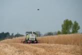 A machine harvesting Miscanthus grass