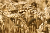 New cap on crop-based biofuels approved by MEPs