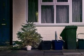 What becomes of your recycled Christmas tree?