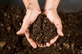 A person holding compost in their hands