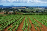 Almost half of all lettuce crops lost to waste on some farms as WRAP puts farm waste in the spotlight