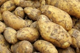 Could face cream hold a sustainable solution to potato crop waste?
