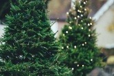 How green is your Christmas tree?