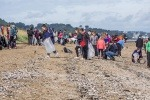Volunteers picking up beach litter