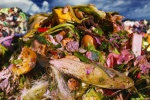Documentary highlights food waste issue with world-famous chefs