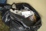 Swansea Council could fine residents for not recycling
