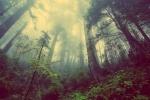 A gloomy forest