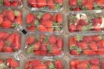 Red strawberries in a clear plastic container.