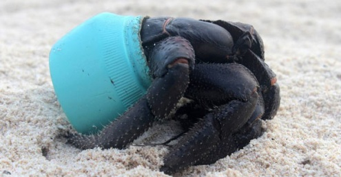 Summer beach clean competition offers prizes for plastic
