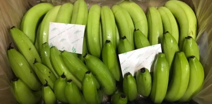 Bananas with the It's Fresh! filters