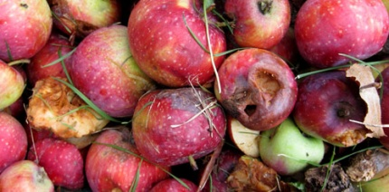 Mixed results on food waste for Courtauld Commitment 3