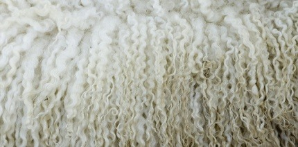 Compostable alternative to plastic packaging uses wool as insulation